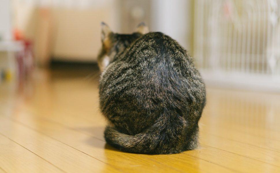 私って猫背かな・・、長引く慢性的な症状の正体はいったい何?